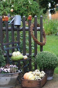 Gartenzaun, kürbis, pumpkin, fall, herbst