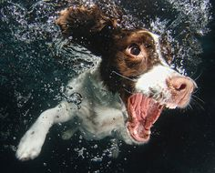 Ever Wonder What It Looks Like When Your Dog Fetches A Ball Underwater? By photographer Seth Casteel