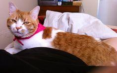 Alexa mi adorada gatita