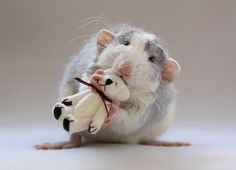 2 - I think that every rattie should have a teddy of its very own from now on, makes them a whole lot more adorable