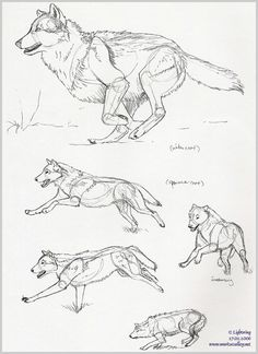 wolf drawing step by step - Google-søgning