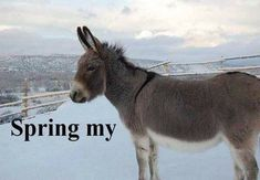meanwhile in canada photos - Bing Images Funny Animal Pictures, Funny Animals, Cute Animals, Animal Funnies, Animal Puns, Meanwhile In Canada, Canada Funny, Canada Eh, Animal Captions