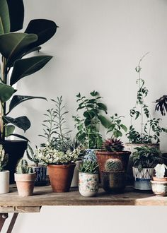 Plants for home.