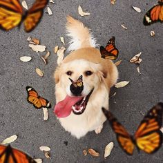 Mister Woof Loves... #butterfly #dogs