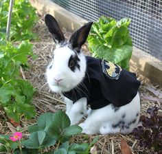 Batman outfit for your small pet . pet costume by turvytopsy