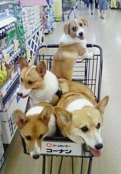 Let's go shopping!!!!!/better go to the bulk aisle