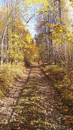 Осень, лес, Россия, Нарконон Димитровград Country Roads