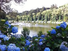 Lago negro - Gramado RS Brasil River, City, Outdoor, Brazil, Outdoors, Cities, Outdoor Games, The Great Outdoors, Rivers