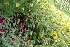 Flowers, Plants, Gardens, Roman, Plant, Royal Icing Flowers, Flower, Florals, Floral
