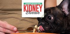 A proper dog kidney disease diet is the most effective treatment for dogs with k. Kidney Diet For Dogs, Dog Kidney Disease Diet, Kidney Failure, Make Dog Food, Best Dog Food, Homemade Dog Food, Pet Food, Kidney Recipes, Dog Food Recipes