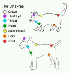 Chakras on your pets