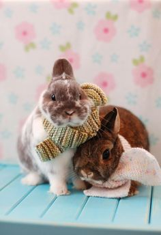 Is it just me, or does the bunny on the left look kind of annoyed? Funny Bunnies, Cute Bunny, Cutest Bunnies, Snow Bunnies, Bunny Rabbits, Hamsters, Baby Animals, Cute Animals, Somebunny Loves You