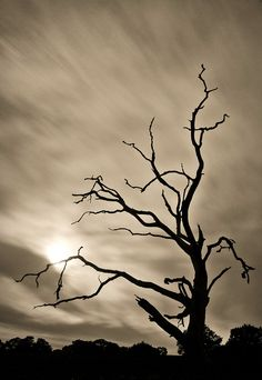 Haunting #tree