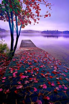 World Best Things: Beautiful Nature Lake Dock, Thousand Islands, Canada Beautiful World, Beautiful Places, Beautiful Scenery, Amazing Places, Natural Scenery, Beautiful Beautiful, Beautiful Flowers, Beautiful Pictures Of Love, Absolutely Stunning