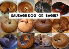 Sausage Dog or Bagel?