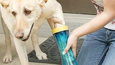 The Paw Wash, for when your dogs feet are completely muddy and you don't want to give them a full bath.  Great idea!