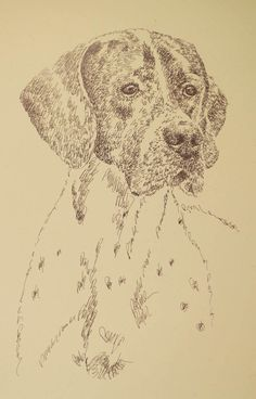 English Pointer: Dog Art Portrait by Stephen Kline - art drawn entirely from the words English Pointer. He also can add your dog's name into the lithograph. drawdogs.com : drawdogs.com His collectors number in the thousands from over 20 countries and every state in the US. Kline's dog art has generated tens of thousands of dollars for dog rescues worldwide. http://drawdogs.com/product/dog-art/english-pointer-dog-portrait-by-stephen-kline/