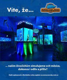 Víte, že... #morskysvet #morskysvetpraha #seaworld #seaworldprague #praha #prague #touristprague #zoo #viteze #ryby #zraloci #koraly #hledasenemo Praha, Sea World, Movies, Movie Posters, Films, Film Poster, Cinema, Movie, Film