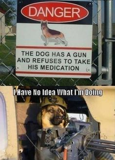 I Think the Purpose of the Sign has Been Accomplished - Funny pictures and memes of dogs doing and implying things. If you thought you couldn't possible love dogs anymore, this might prove you wrong. Memes Estúpidos, Funny Memes, That's Hilarious, Funny Qoutes, Funny Cats And Dogs, Funny Animals, Funny Puppies, Animal Funnies, Animal Jokes