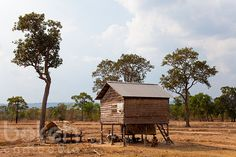 Farm house and trees | Siem Reap Province, Cambodia