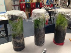 Building a terrarium while learning about the water cycle. Engineering design process!!