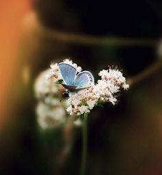 butterfly by alberta
