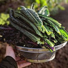 Look how yummy this kale looks! If one of your New Year's Goals was to eat healthier it's not too late! And you can certainly start planning that Spring Vegetable Garden right now. Get inspired by the incredible gardens of @growingbacktoeden 💚