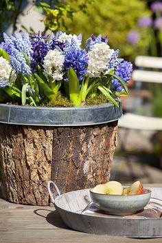 Bloembollen brengen je balkon tot leven #bloembollen #bulbs Bekijk meer tips op www.tuinen.nl