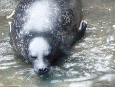 Veden vuosi 2013: Hylkeet joogaavat ja irvistävät