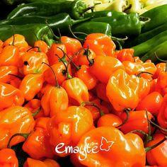 Habanero Peppers product of México 🇲🇽 🌶 #eco #equilibrio #energía #emayte #healthyfood #healthylife #hot #phonepics #picante #salud #saludable #sonríe #😊 #vidasana