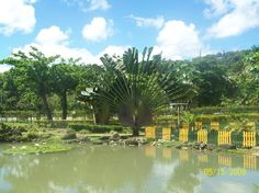 Turtle River Park, Ocho Rios: See 161 reviews, articles, and 60 photos of Turtle River Park, ranked No.18 on TripAdvisor among 69 attractions in Ocho Rios.