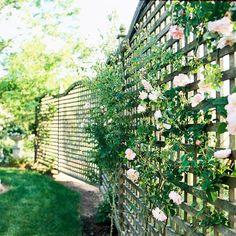 Trend gartenzaun bauen sichtschutz rosen kletter gitter