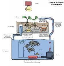 """Résultat de recherche d'images pour """"schema pour la fabrication d'un parc aquaponique"""""""