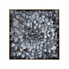 This flower-like sculptural piece is composed of a hand-selected gradient of mussel shells.