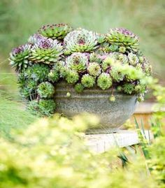 Succulent Arrangement...make a domed shape with moss and soil for the base so that it allows the height?