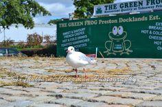 https://flic.kr/p/LEJinm | Seagulls at The Green Frog, Preston Marina | A…