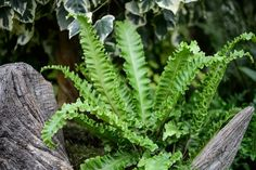 Discover 10 of the best woodland plants to grow – perfect for growing in shady areas of the garden – from the experts at BBC Gardeners' World Magazine. Small Courtyard Gardens, Back Gardens, Small Gardens, Woodland Plants, Woodland Garden, Lily Turf, Liriope Muscari, Small Garden Design, Types Of Soil