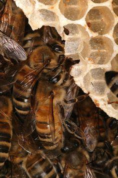 Busy Bee, Honeycomb, Art, Bees, Honey, Bee, Art Background, Kunst, Honeycombs