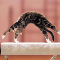 Gymnastics cat!