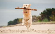 Is throwing a stick to your dog dangerous? Find out now...