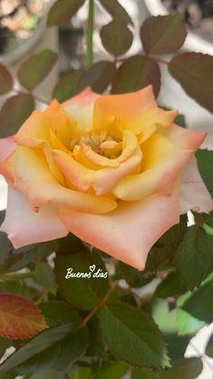 #instagram #dicas #stores #flores #plantas #flores #rosas #pinterest