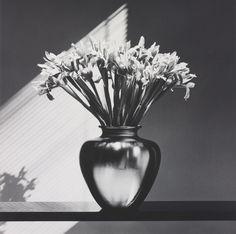 Robert Mapplethorpe, Irises (1986)