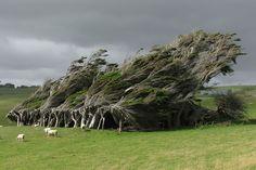 Neuseeland - Vom Winde verweht