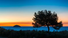 Blue hour tree and island - Silhouette of a tree and Benidorm Island in the blue hour with the first light of dawn on the horizon. Taken from the coastal path north of Villajoyosa, Spain