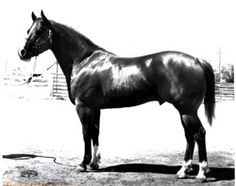 The great Skipper's King, full brother to Skipperette and Skippers Prince. Scroll down for his record.