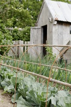 bamboo & metal supports for garden rows