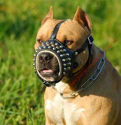 Pitbull Maulkorb Hund Kaufen