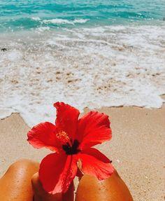Wallpaper Praia, Tumblr Wallpaper, Wallpaper Backgrounds, Hawaii Flowers, Hibiscus Flowers, Summer Flowers, Most Beautiful Flowers, Love Flowers, Beautiful Beaches