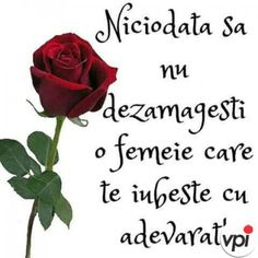 Love, Flowers, Plants, Internet, Type 3, Facebook, Photos, Amor, Pictures