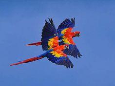 Alleen de natuur kan zulke mooie kleuren creëren